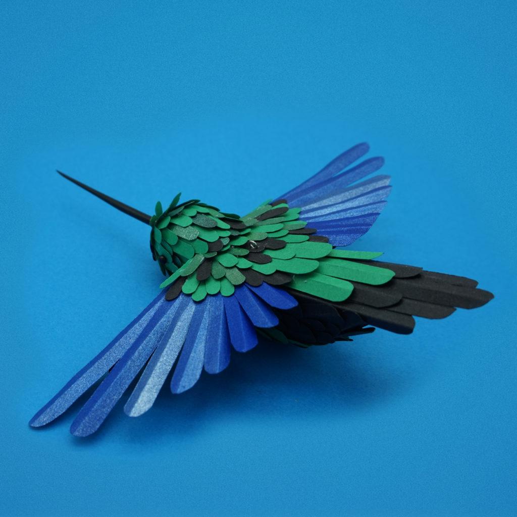colibri ailes de saphir 01 dessus